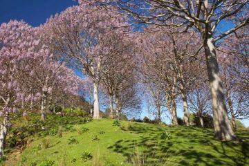 NATIONAL GEOGRAPHIC: Zbog čega je drvo koje se naziva fabrikom kiseonika sve popularnije?